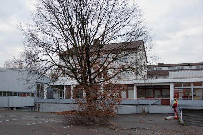 Baumfaellung02